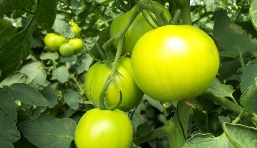גידול צמחים