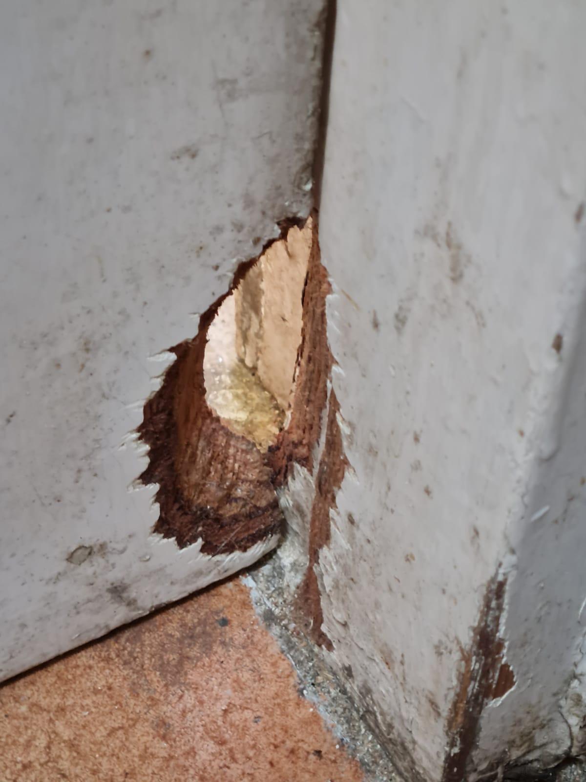נזקי חולדות בבית - כרסום חור בדלת מעץ - גור הדברות
